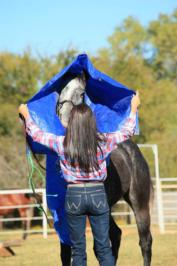 desensitizing horses tarps